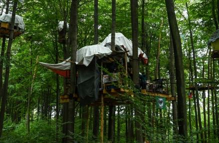 Dannenröder Wald #DanniBleibt